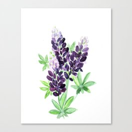 Lupine Wildflowers Canvas Print