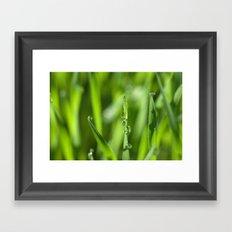 Morning dew 8548 Framed Art Print