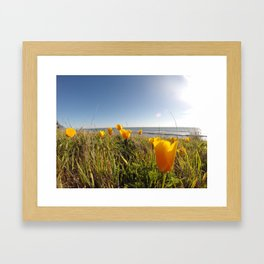 Poppies in the Wild Framed Art Print