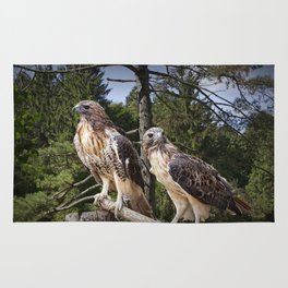 Pair of Red-tail Hawks Rug