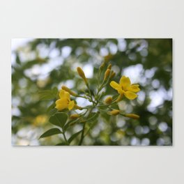 Shaded Carolina Jessamine Canvas Print