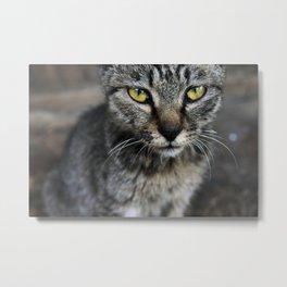 Cat on Duty Metal Print