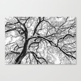 Gnarly Arms Canvas Print