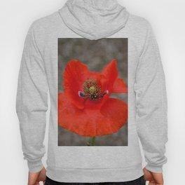 Bright Red Poppy by Teresa Thompson Hoody