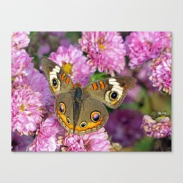 Common Buckeye Butterfly Canvas Print