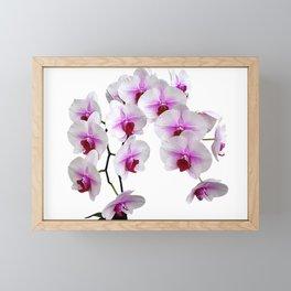 White and red Doritaenopsis orchid flowers Framed Mini Art Print