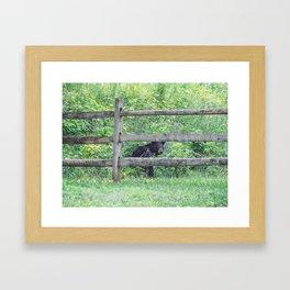 I See a Bear! Framed Art Print