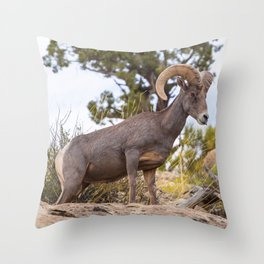 Beautiful Big Horn Sheep Throw Pillow