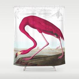 American Flamingo John James Audubon Vintage Scientific Hand Drawn Illustration Birds Shower Curtain