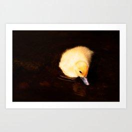 Baby Duckling Swimming Art Print