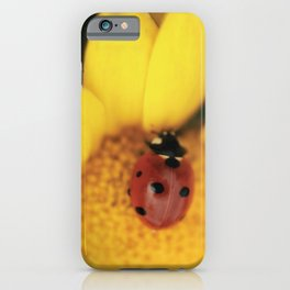 Ladybug on yellow flower - macro still life - fine art photo for interior design iPhone Case