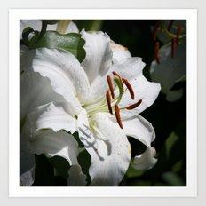 White Lily by Teresa Thompson Art Print