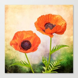 Two beautiful poppies with textures Canvas Print