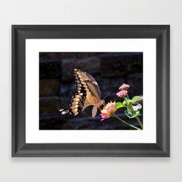Swallowtail Overexposed Framed Art Print