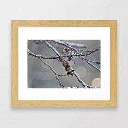 Little Acrons Framed Art Print