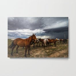 Pride - Horse Watches Over Herd as Storm Approaches Metal Print