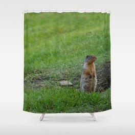 Columbian ground squirrels in Jasper National Park Shower Curtain