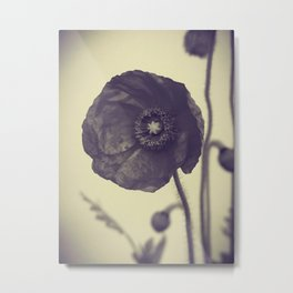 Nature in Black and White -- Poppy -- Botanical Metal Print
