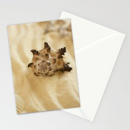 Black and White Murex Shell Stationery Cards