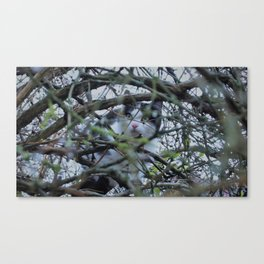 Minilu de la Terrasse. Canvas Print