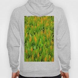 Field of Celosia Hoody