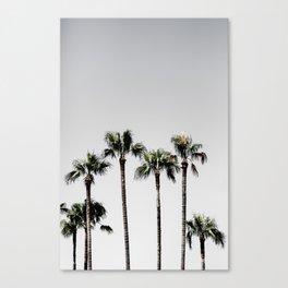 Palm Trees 5 Canvas Print
