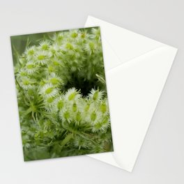 Queen Anne's lace bud Stationery Cards