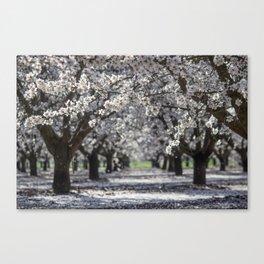 Raining White Flower Petals Canvas Print