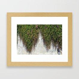 Plant-Covered Alcatraz Wall Framed Art Print
