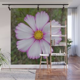 Winter Cosmos Flower in Pink 7 Wall Mural