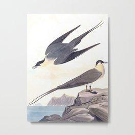 Arctic Yager Bird Metal Print