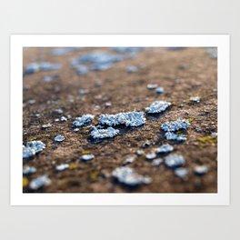 Lichens Art Print