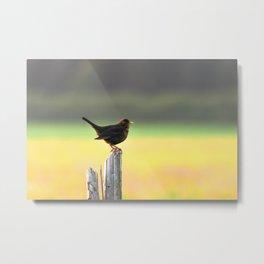 Blackbird on a Wooden Post Metal Print