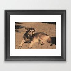 Lazy Dawg no.1 Framed Art Print