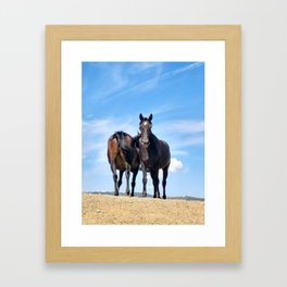 Twin horses Framed Art Print