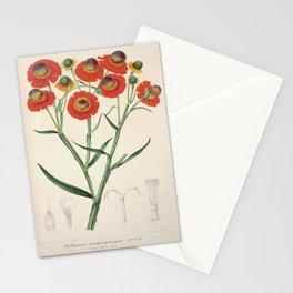 Helenium Atropurpureum Vintage Botanical Floral Flower Plant Scientific Illustration Stationery Cards
