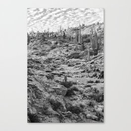 Fossilized path Canvas Print