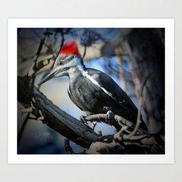 October Pileated Woodpecker Art Print