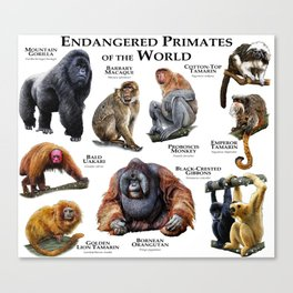 Endangered Primates of the World Canvas Print