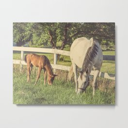 Mare and Foal // Horses Metal Print