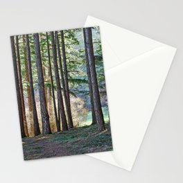 MEADOW LIGHT ON THE FOREST EDGE Stationery Cards