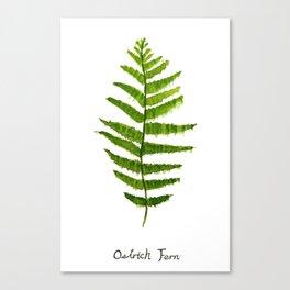 Ostrich fern Canvas Print