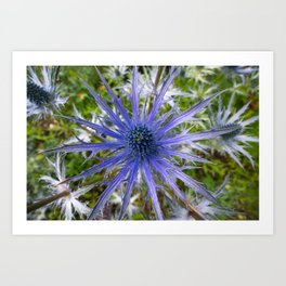 A thistle with style Art Print