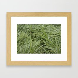 California Grass & Dew Framed Art Print