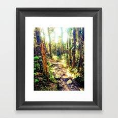 Zealand Forest Framed Art Print