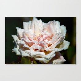 Hollywood Flower Canvas Print