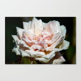 Hollywood Flower Canvas Print
