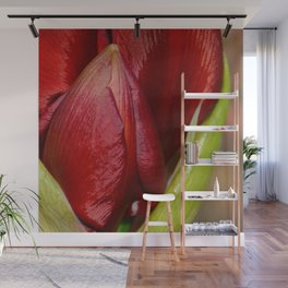 Red Amaryllis by Teresa Thompson Wall Mural