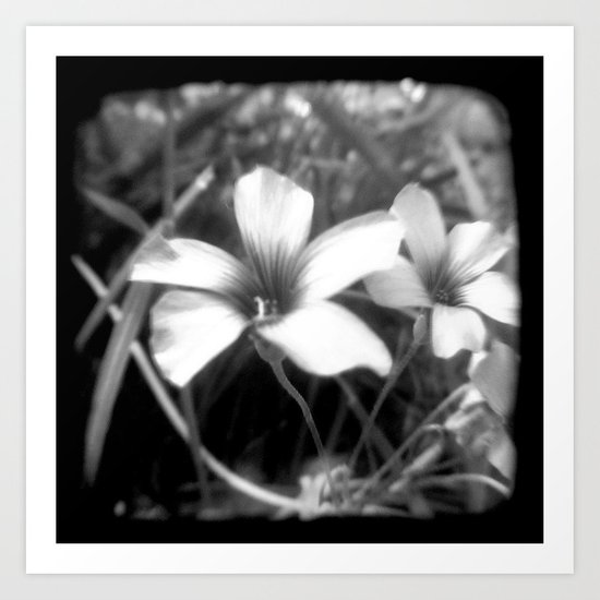 Oxalis - Through The Viewfinder (TTV) Art Print