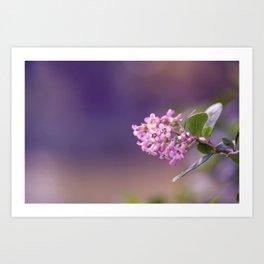Pink Summer Flower Art Print